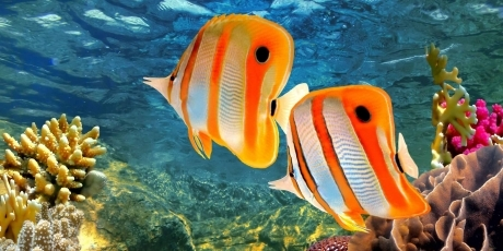 Planul incredibil de stupid al Australiei prin care se poate distruge Marea Barieră de Corali
