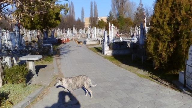 Specialistul în câini al lui Stan – Ionuț Pucheanu – a transformat cimitirul Eternitatea în padoc