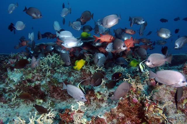 O semnătură și președintele Obama poate salva rezervația marină Papahānaumokuākea