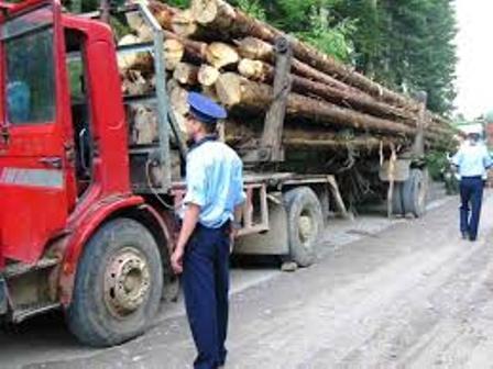 Avem trei luni ca să scăpăm de Schweighofer și să salvăm pădurile României