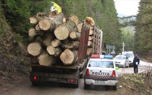 Legea contravențiilor silvice trebuie să rămână eficientă în combaterea tăierilor ilegale