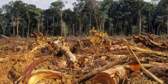 Opriți atacul secret asupra Amazoniei