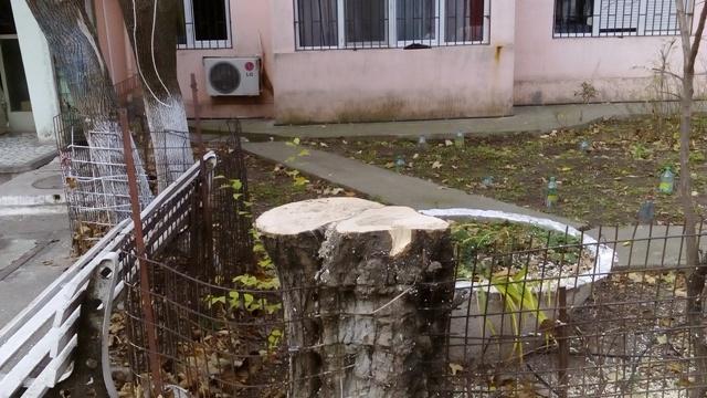 """Tăietorii de copaci de la Gospodărire Urbană acționează după zicala """"s-a supărat ca prostul pe sat"""""""