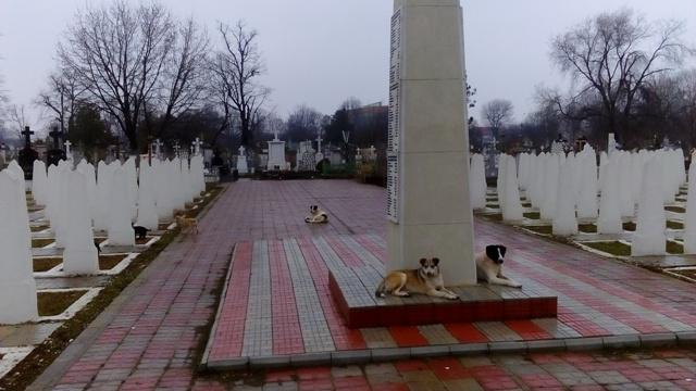 Directorul Gospodărire Urbană, Bogdan Ardean, și-a abandonat companionii în cimitirul Eternitatea
