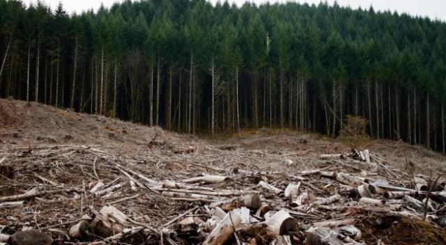 Să oprim jefuirea ultimei păduri!