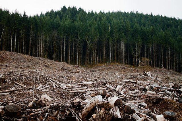Mobilizare generală pentru pădurile României