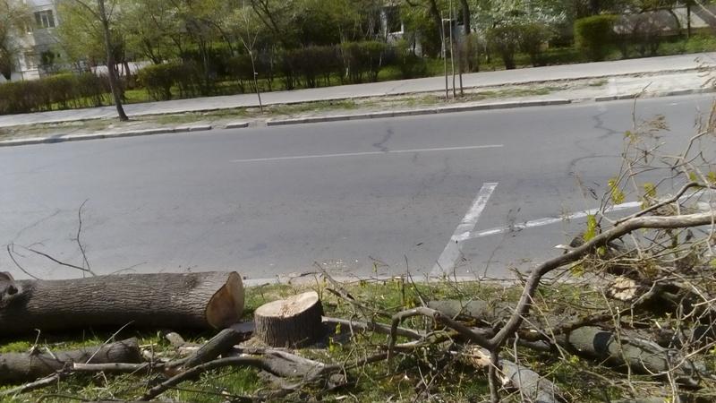 """Distrugătorii de natură de la Gospodărire Urbană sunt susținuți de """"cotidianul gălățenilor"""""""