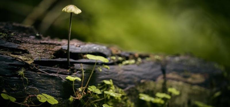 Știi cum au schimbat pădurile clima planetei?